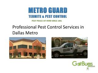 Professional Pest Control Services in Dallas Metro