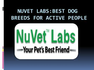 NuVet Labs: Best Dog Breeds for Active People