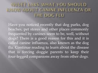 NuVet Labs| What You Should Know About Canine Influenza or T