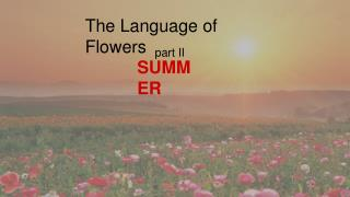 The Language of Summer Flowers