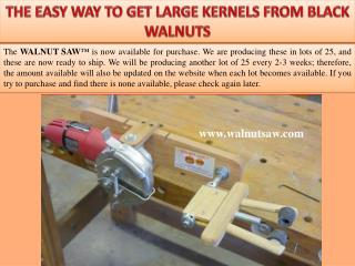 The easy way to get large kernels from black walnuts