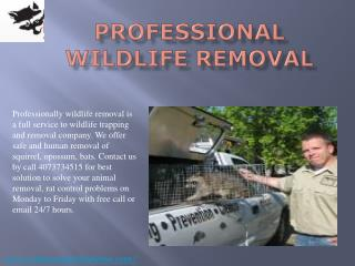 #Professional Wildlife Removal