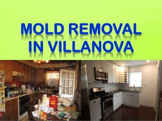 MOLD REMOVAL IN VILLANOVA