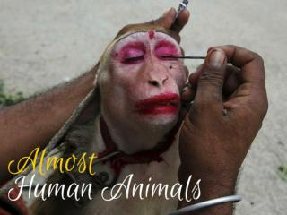Almost Human Animals