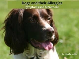 Dogs and the allergies they are prone to