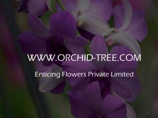 Buy Orchid