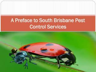 A Preface to South Brisbane Pest Control Services