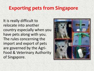 Pet Movers Singapore