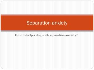 Separation anxiety. How to help a dog with separation anxiet
