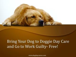 Bring Your Dog to Doggie Day Care and Go to Work Guilty Free