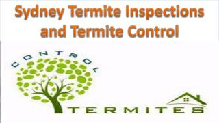 Sydney Termite Inspections and Termite Control