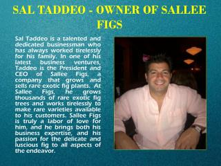 SAL TADDEO - OWNER OF SALLEE FIGS