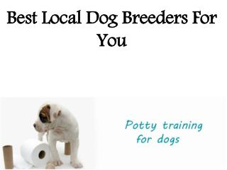 Best Local Dog Breeders For You