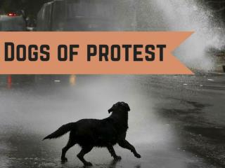 Dogs of Protest