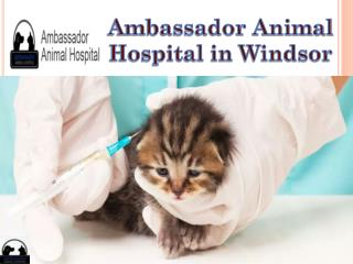 Ambassador Animal Hospital in Windsor