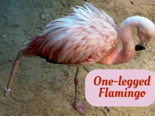 One-legged Flamingo