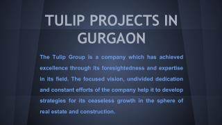 tulip projects in gurgaon
