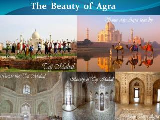 The Beauty of Agra with Taj Mahal and its History - Day Tour
