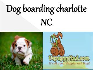 Dog boarding charlotte NC