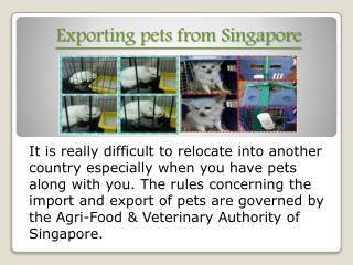 transporting pets to Singapore
