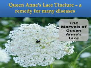 Queen Anne's Lace Tincture � a remedy for many diseases
