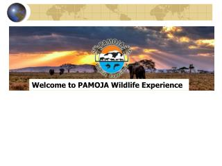 Welcome to PAMOJA Wildlife Experience