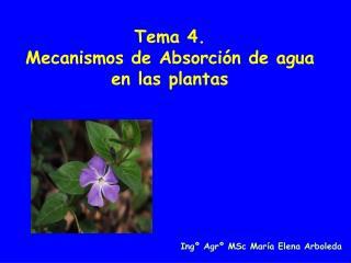 Tema 4.  Mecanismos de Absorci n de agua en las plantas