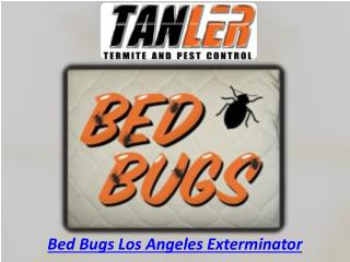 Bed Bugs Los Angeles Exterminator