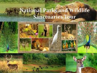 National Parks and Wildlife Sanctuaries Tour