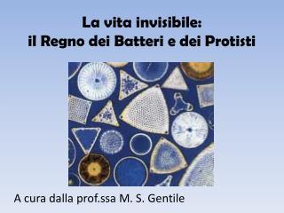La vita invisibile: il Regno dei Batteri e dei Protisti