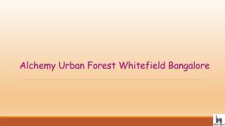 Alchemy Urban Forest Price