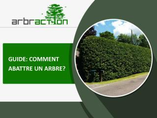 Arbraction: comment abattre un arbre au Québec?