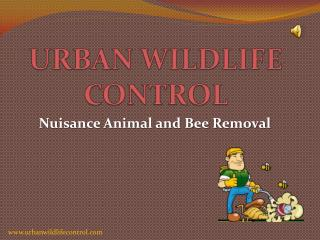 Why Rodent Control Service is Important?