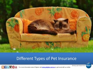 Different Types of Pet Insurance - Petplan