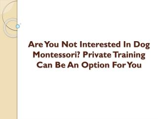 Are You Not Interested In Dog Montessori? Private Training Can Be An Option For You