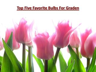 Top Five Favorite Bulbs For Graden
