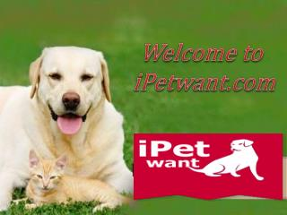 Short Clip on iPetwant Dog Training Collar