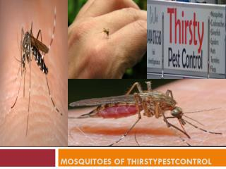 Mosquitoes of Thirstypestcontrol