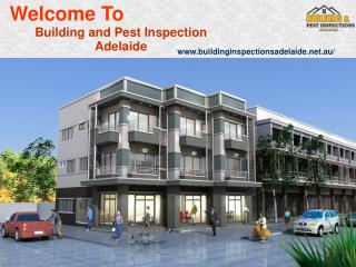 Building And Pest Inspection Adelaide
