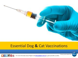 Essential Dog and Cat Vaccinations