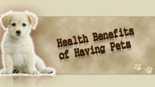 Health Benefits Of Having Pets