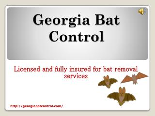 Hire Professionals For Bat Removal From House