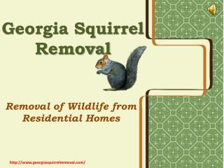 Squirrel Pest Control- Time To Remove Them Out of Your House