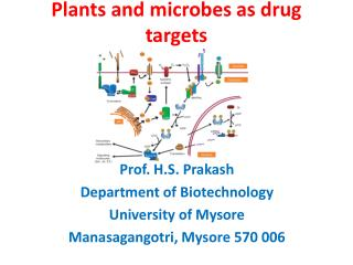 Plants and microbes as drug targets