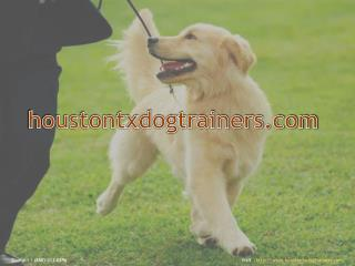 Houston Dog Trainers