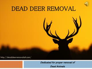 What To Do  For a Deer Removal from Your Garden?