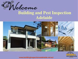Best Pest Inspection Services In Adelaide
