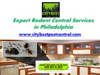 Professional Rodent Control Services in Philadelphia - www.citybestpestcontrol.com