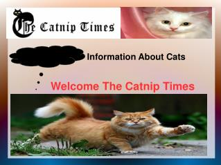 Information That Will Make Care For Your Cat Easier