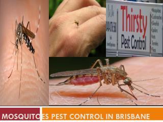 Mosquitoes Pest Control in Brisbane